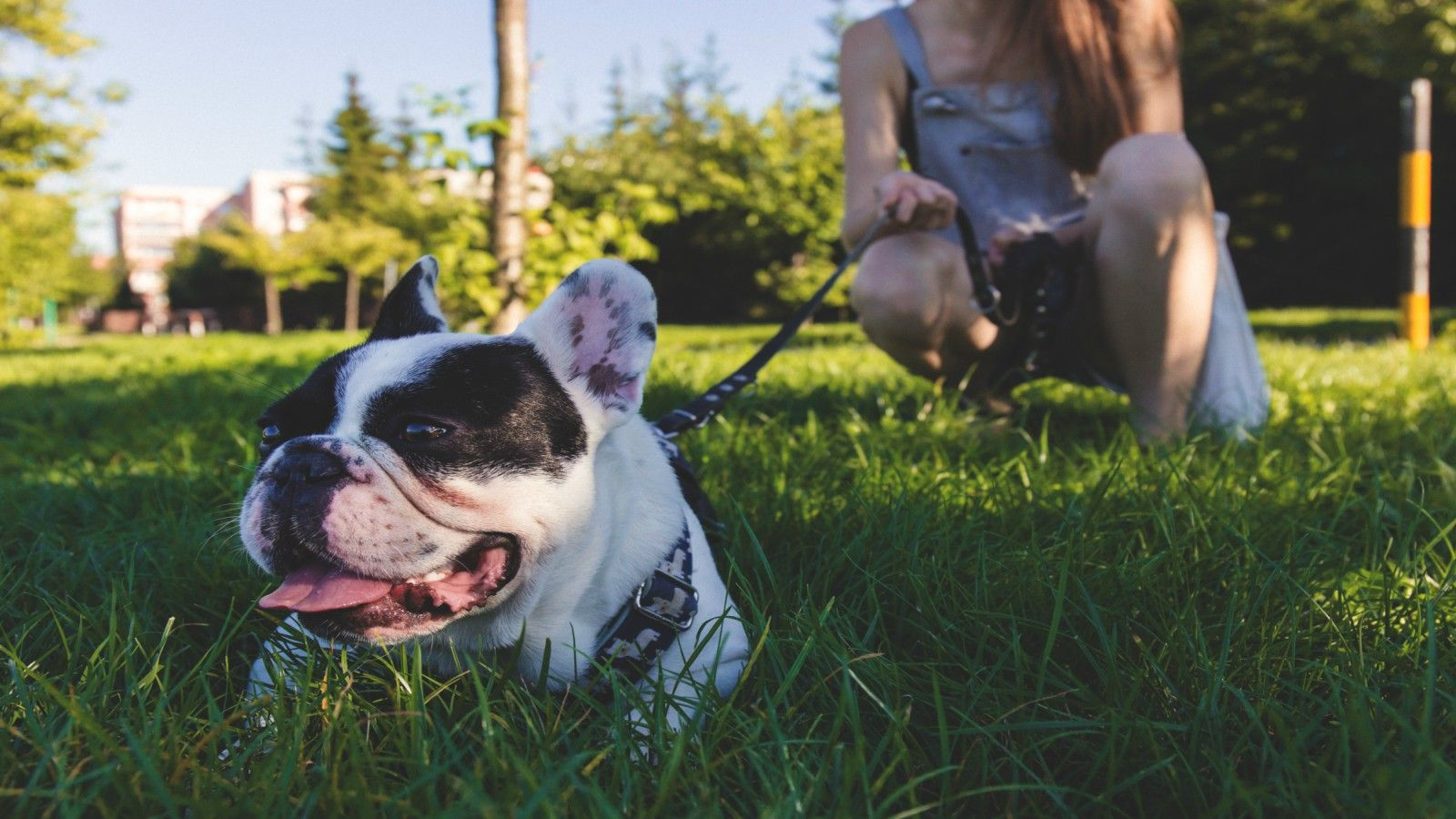 Pet-Friendly Hotels in Richardson - Dog Walk